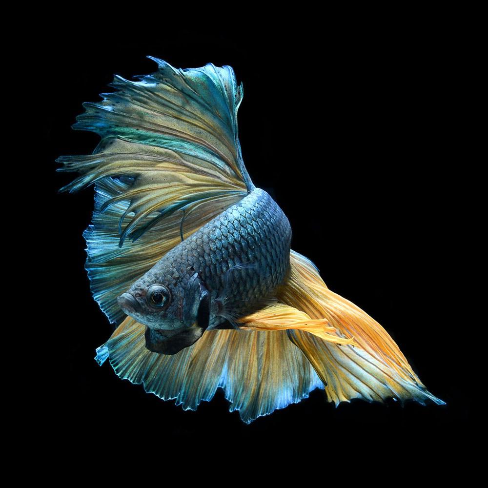 peces-Visarute-Angkatavanich-2