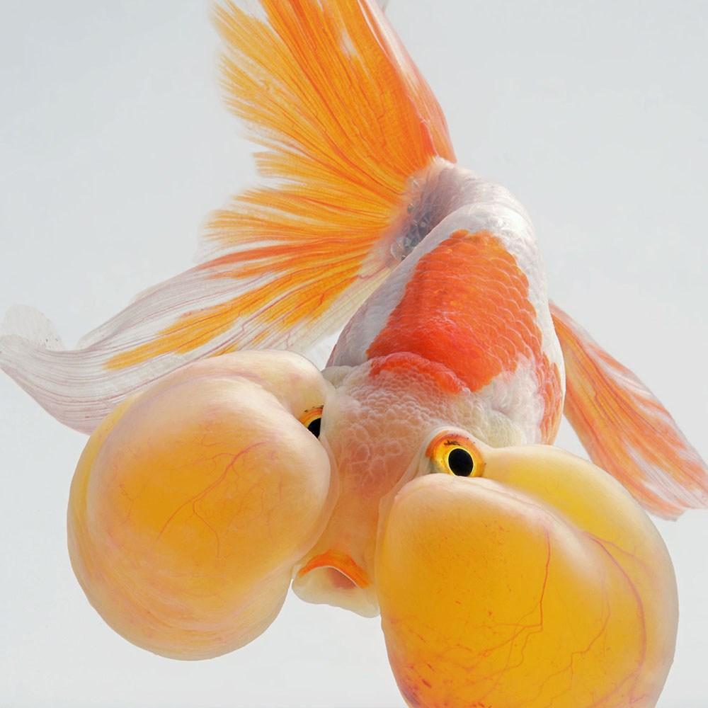 peces-Visarute-Angkatavanich-5