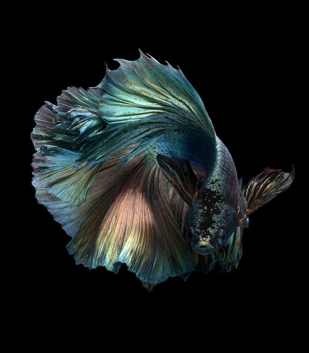 peces-Visarute-Angkatavanich-7