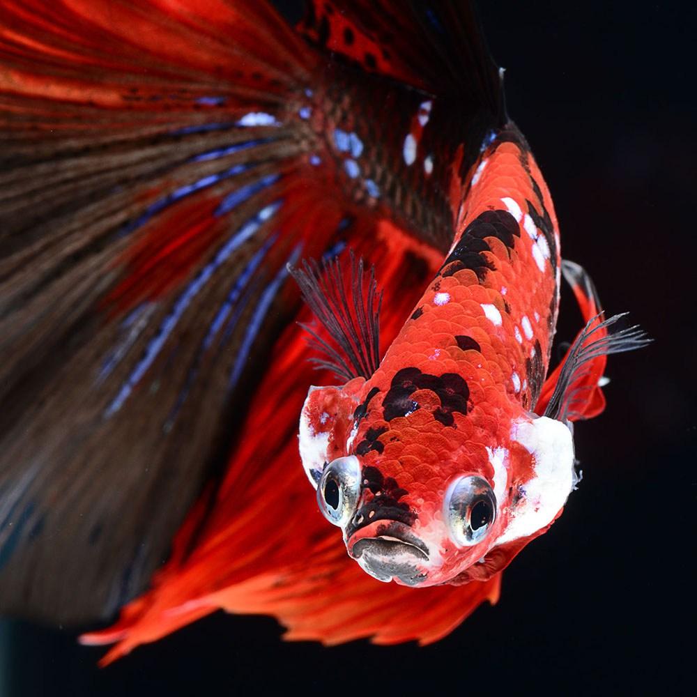 peces-Visarute-Angkatavanich-9