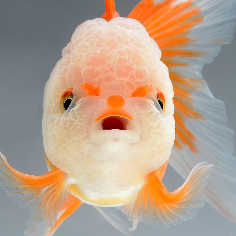 peces-Visarute-Angkatavanich