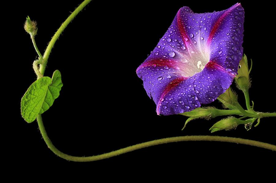 flores-con-rocio
