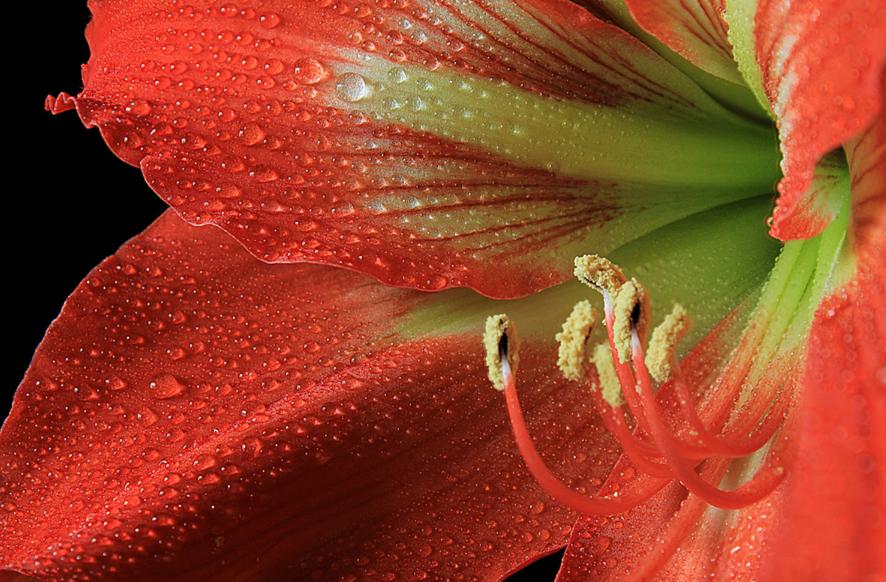 flores-con-rocio-6