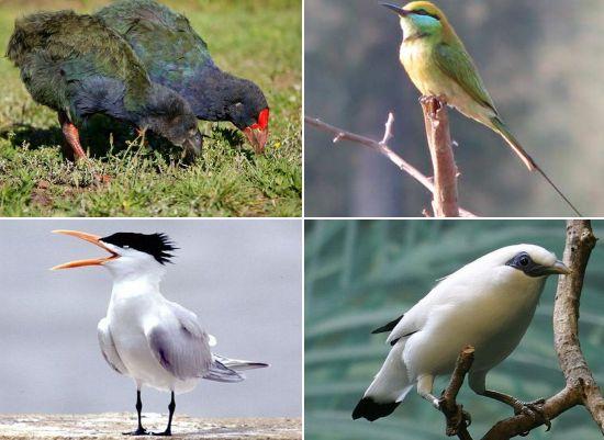aves-en-peligro-de-extincion-8