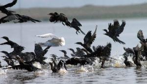 aves-que-comen-plastico-5