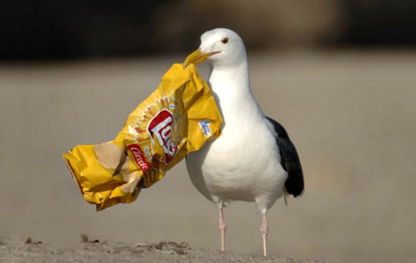 Descubre porque las aves marinas comen plástico – Nuestroclima