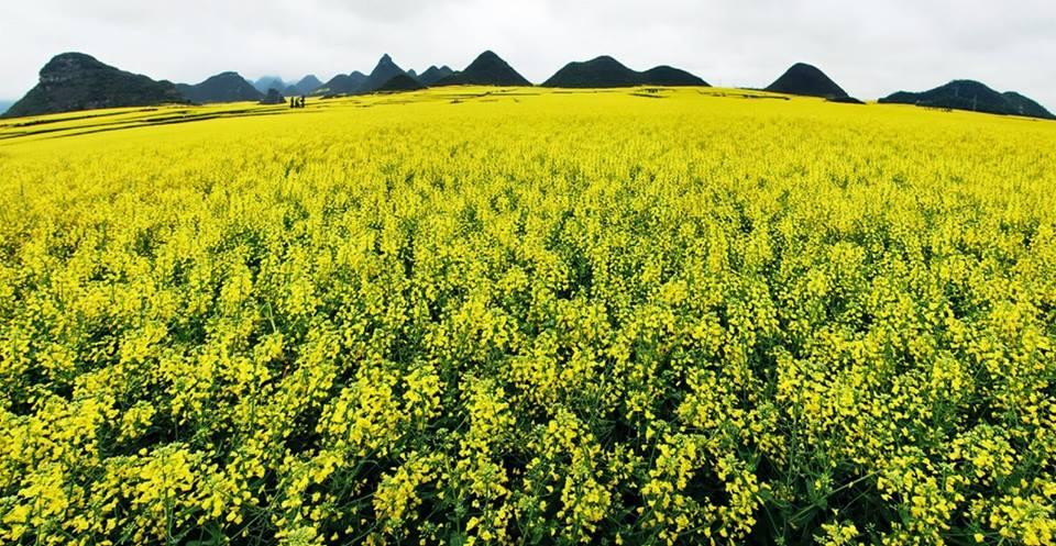 oneano-de-flores-en-china-5