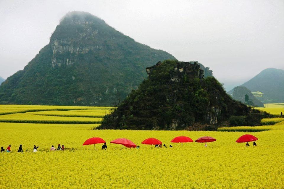 oneano-de-flores-en-china-9