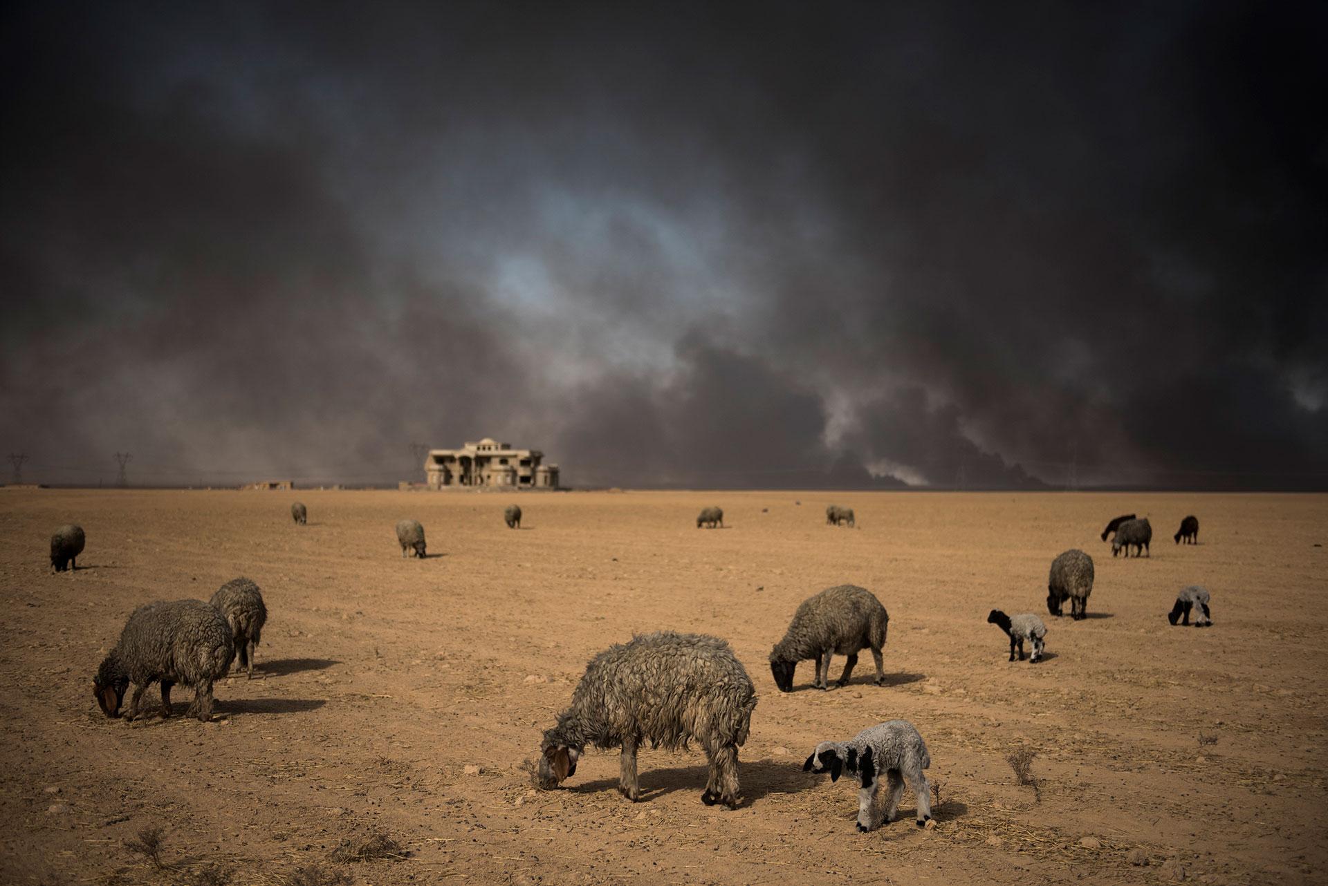 postales-de-humo-en-irak-3