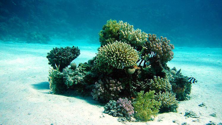 zonas-muertas-del-oceano-indico-6